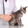 Ветеринарные клиники в Селижарово